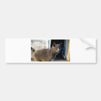 Blue Cat Focus Bumper Sticker