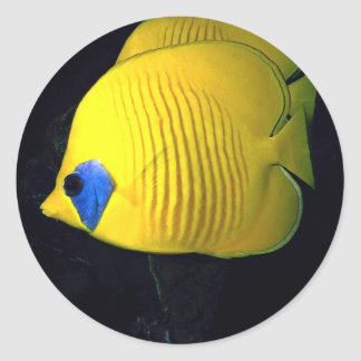 Blue cheed (masked) butterfly fish, Red Sea, Egypt Classic Round Sticker