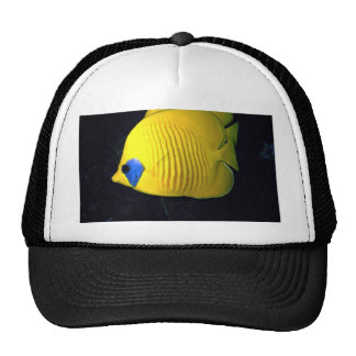 Blue cheed (masked) butterfly fish, Red Sea, Egypt Hat