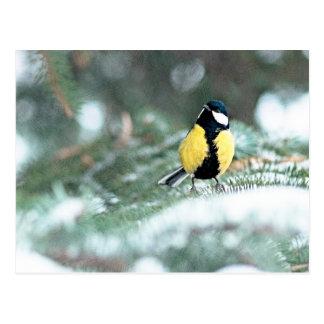 Blue Chickadee On Green Spruce Tree Postcard