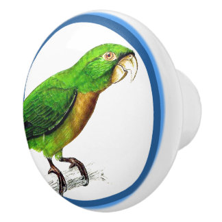 Blue Circles Conure Parrot Bird Animal Knob