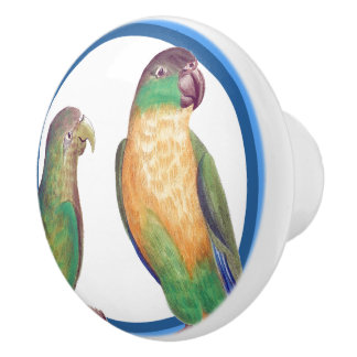 Blue Circles Conure Parrot Birds Animal Knob