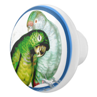 Blue Circles Grooming Parrot Birds Animal Knob