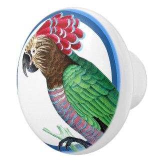 Blue Circles Hawk Headed Parrot Bird Animal Knob