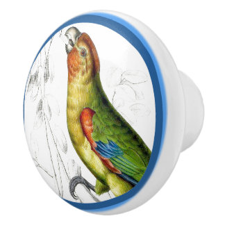 Blue Circles Little Amazon Parrot Bird Animal Knob