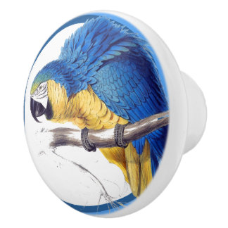 Blue Circles Macaw Parrot Bird Animal Knob