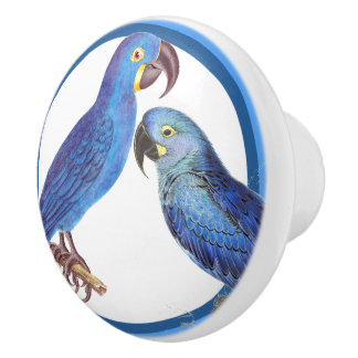 Blue Circles Macaw Parrot Birds Animal Knob