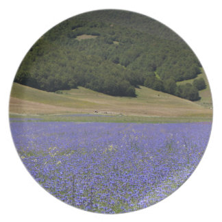 Blue colored fields with cornflowers plates