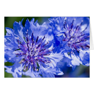 Blue Cornflower Card