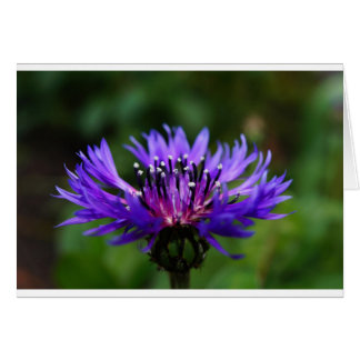 Blue Cornflower Flower Blossoms Peace Love Destiny Card