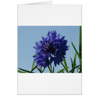 Blue Cornflowers Card
