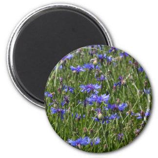 Blue cornflowers in a field 2 inch round magnet