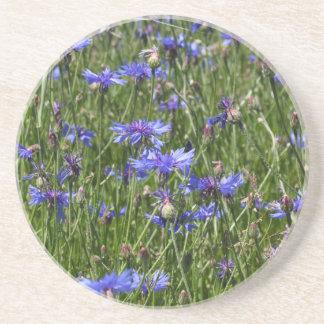 Blue cornflowers in a field drink coaster