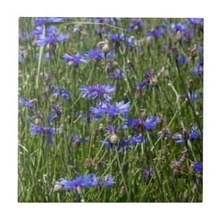 Blue cornflowers in a field tile