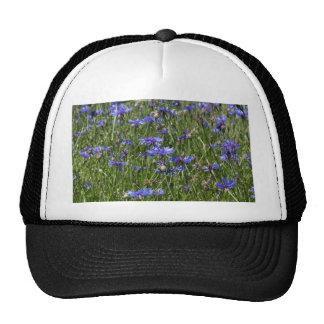 Blue cornflowers in a field trucker hat