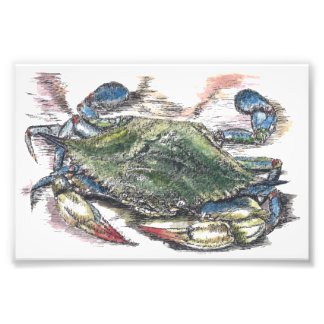 Blue Crab Art Photo Print