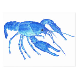 Blue Crawfish Postcard