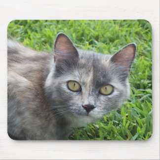 Blue Cream -Tortie Kitty Mouse Pad