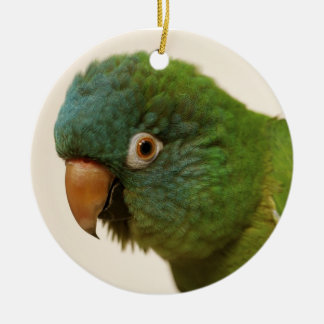 Blue-crowned Conure Ornament