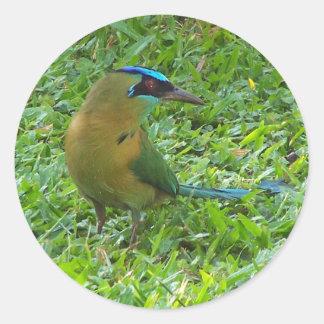 Blue-crowned Motmot Classic Round Sticker