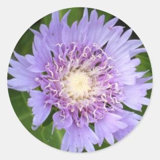 Blue Daisy Aster Round Sticker