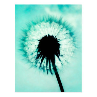 Blue Dandelion blue one dandelion Postcard