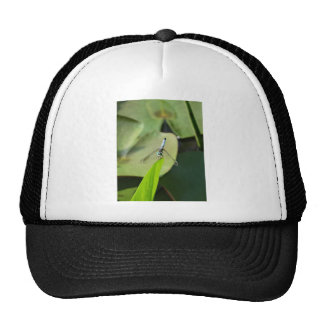 Blue Dragonfly on a green leaf. Hats
