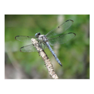 Blue Dragonfly on Perch Postcard