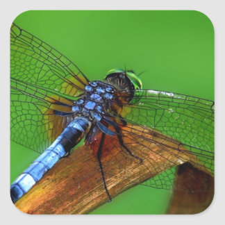 Blue Dragonfly Square Sticker
