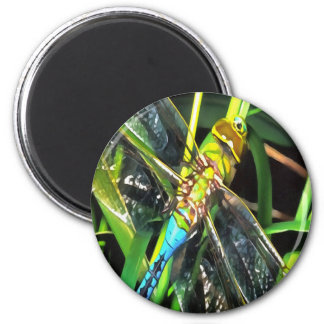 Blue Dragonfly Wings 2 Inch Round Magnet