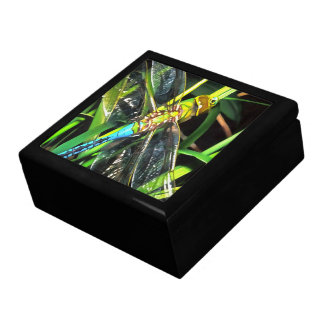 Blue Dragonfly Wings Gift Box
