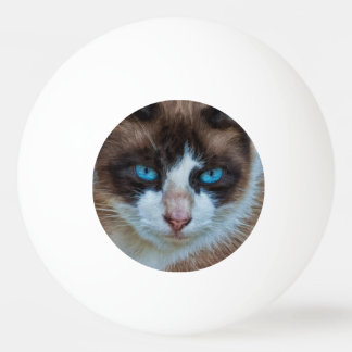 Blue Eyed Brown and White Haughty Cat Ping Pong Ball