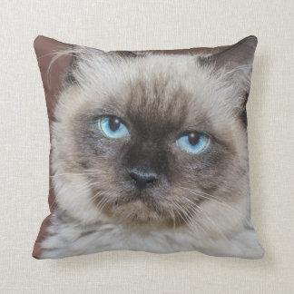 Blue eyed cat throw cushion