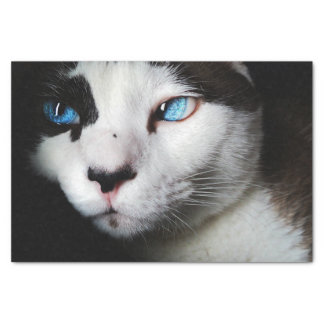 Blue-Eyed Cat Tissue Paper