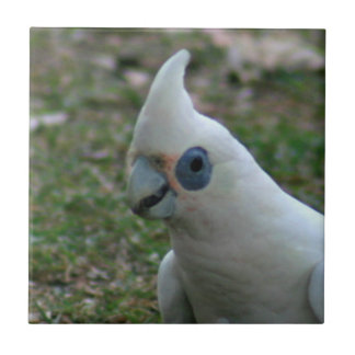 Blue Eyed Cockatoo Ceramic Tiles