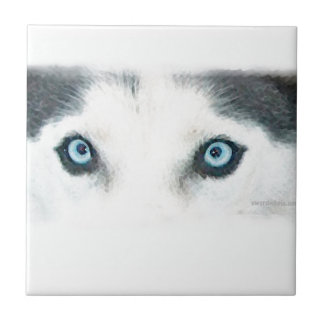 Blue eyed dogs can see the wind tile