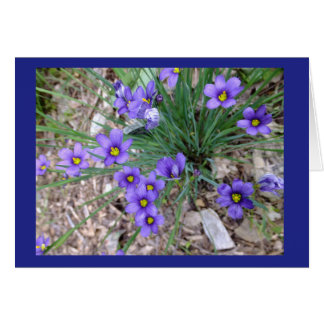 Blue Eyed Grass Blank Note Card