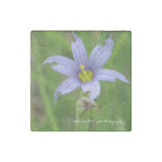 Blue-Eyed Grass Magnet Stone Magnets