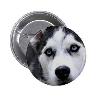 Blue Eyed Husky Button