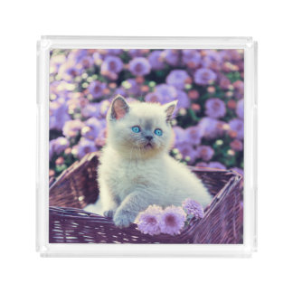 Blue Eyed Kitten Cat In Basket With Lilac Flowers Acrylic Tray