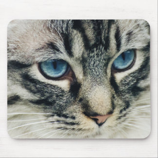 Blue-Eyed Tabby Cat Close-up Mouse Pad