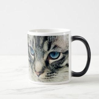 Blue-Eyed Tabby Cat Face Morphing Mug