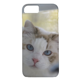 Blue Eyed White Cat iPhone Case