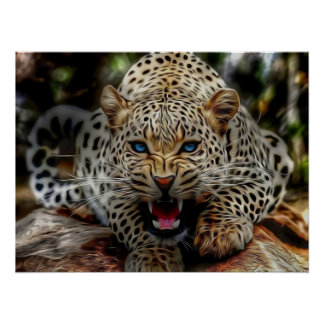 Blue Eyes Cheetah Poster
