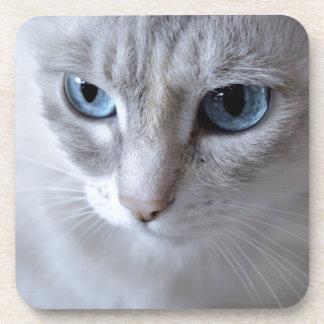 Blue Eyes Kisa Cat Coaster