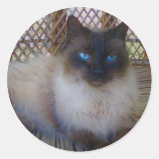Blue Eyes Kitty Collection Round Sticker
