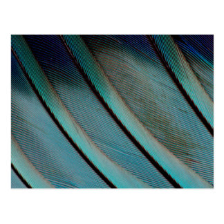 Blue feather pattern postcard