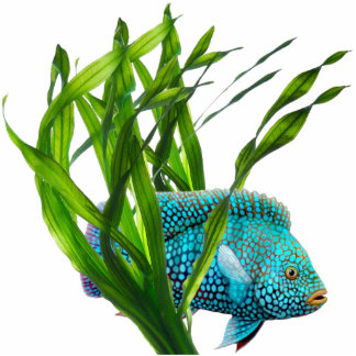 Blue Fish in Seaweed Magnet Photo Sculpture Magnet