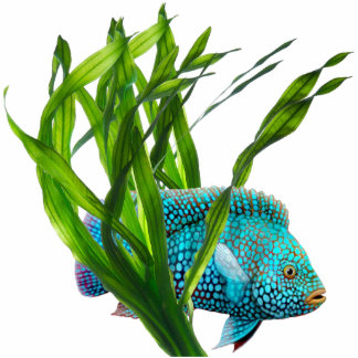 Blue Fish in Seaweed Pin Photo Sculpture Button