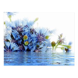Blue floral decor arrangement clear water peaceful postcards